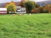 SheepHouse